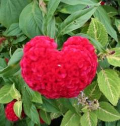 hart flower